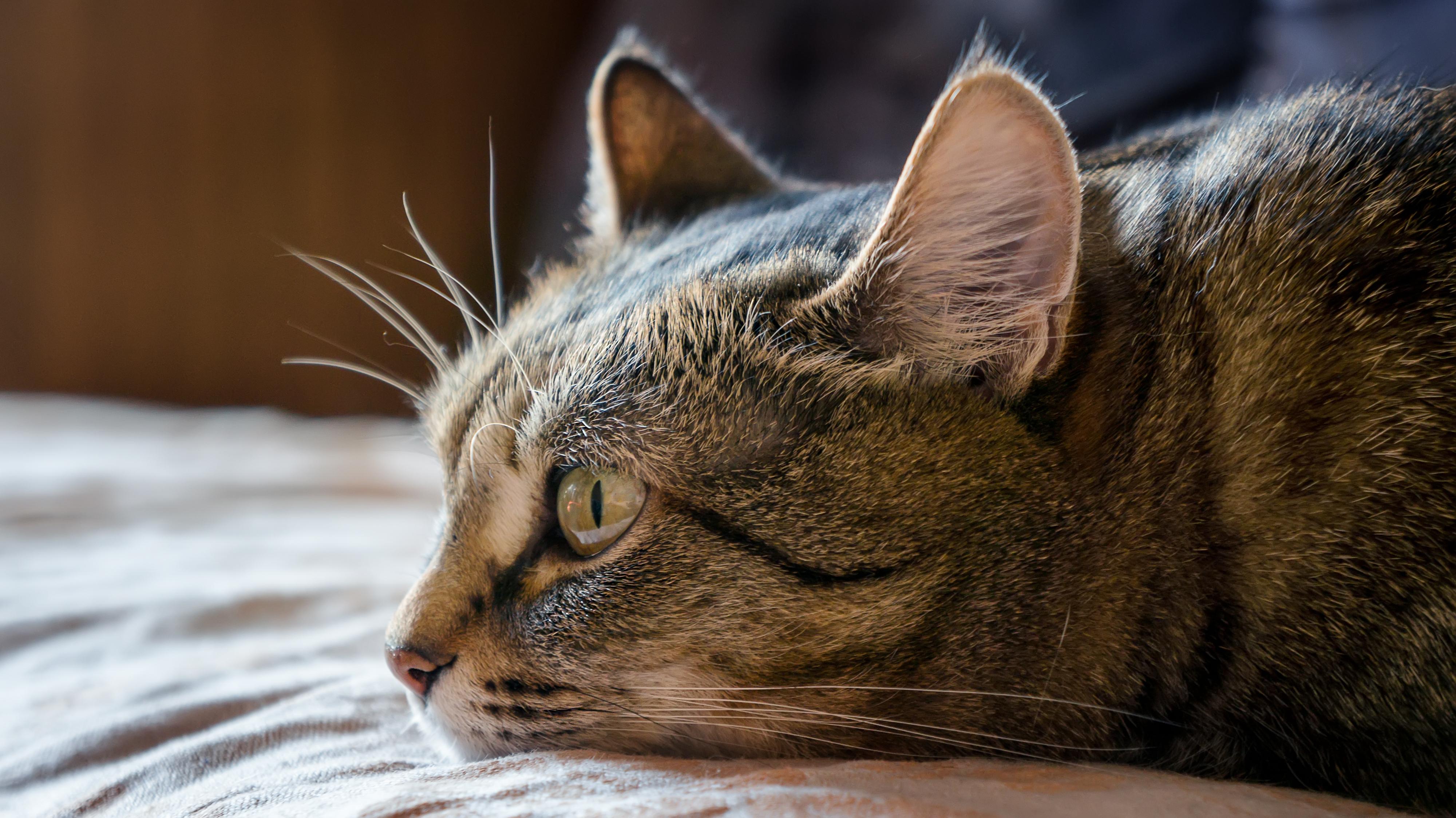 картинки тоскующий кот простой вариант приготовления