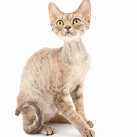 Cat STATS: Allergy Friendly Cats