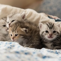 Cat Facts: Pregnancy and Birth