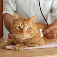 Basic Veterinary Care Terms for Cats Explained