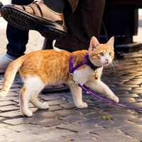 Trending: Get Your Cat Outside