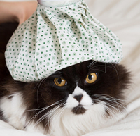 Spotlight on Feline Diseases: Cat Flu