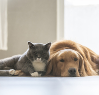 The Coexistence of Cats and Dogs