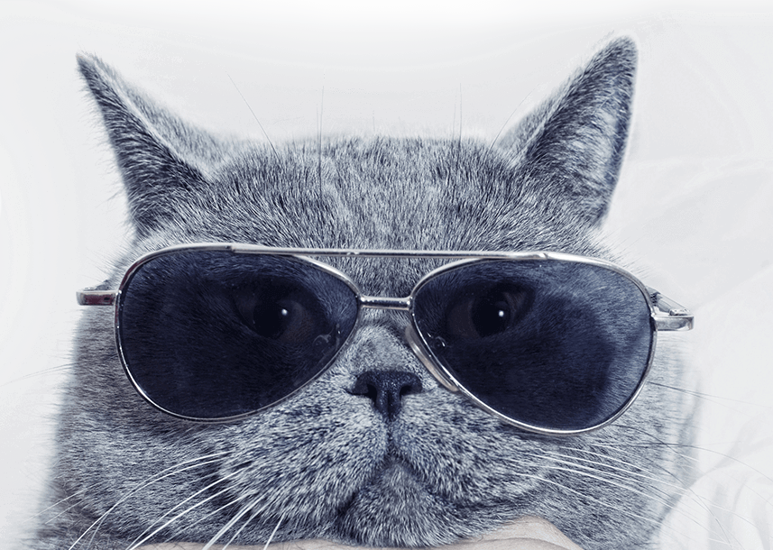 cat-glasses.png